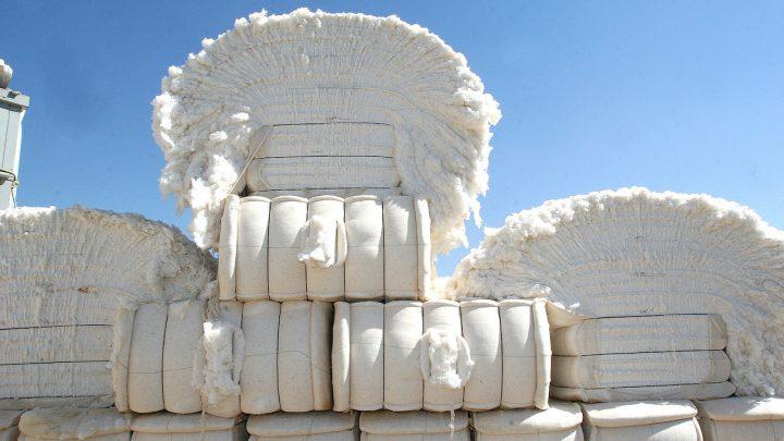 Contran autoriza uso de caminhões maiores para o transporte de algodão